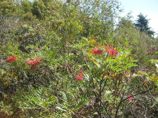 UCSC Arboretum: A Rare Burst of September Color