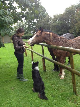 Pentre Mawr Country House: treat time