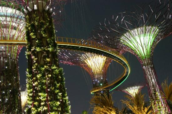 Garden By The Bay Night super-trees and sky-way. - picture of gardensthe bay