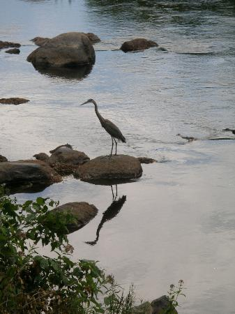 Henniker House: Blue Heron on the River