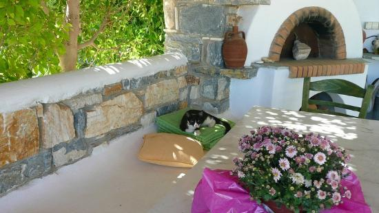 Ilios of Paros: Local kitty napping by the BBQ area