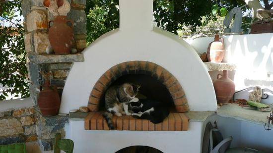 Ilios of Paros: Cats by the BBQ area