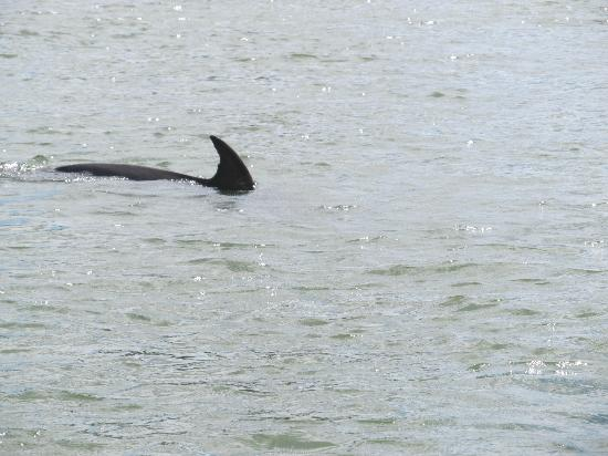 Dolphin Picture Of Island Time Charters Hilton Head
