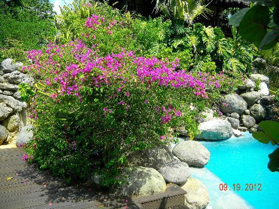 Villas Sur Mer: Poolside flowers