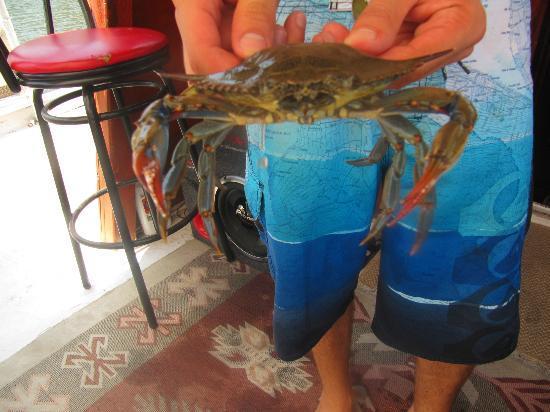 Sahil Restaurant: Crab fishing was a success