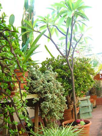 Bed & Breakfast Dolce Silenzio : La natura in terrazza!