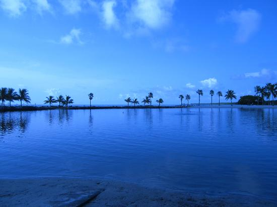 Matheson Hammock Park: Atoll Beach--Look how great it looks for a swim!