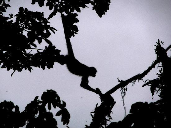 Arenal Observatory Lodge & Spa: Spider Monkey