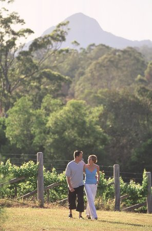 Traveston, Australia: Dingo Creek Vineyard photo courtesy of Ross Eason