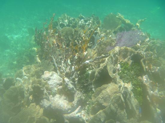 Casa Paraiso: Beautiful coral