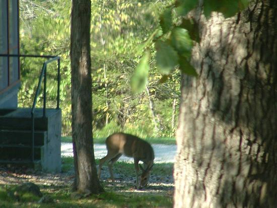 Kirbyville, Missouri: Deer 