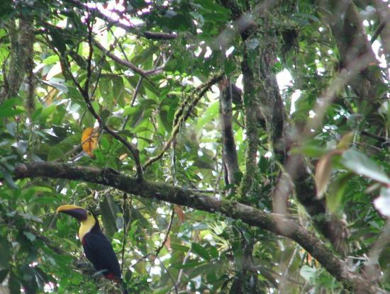 Selva Verde Lodge: Toucan by the Pool