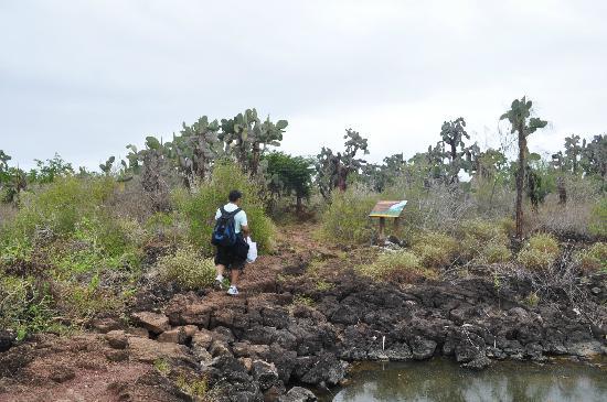 Path toward Las Grietas