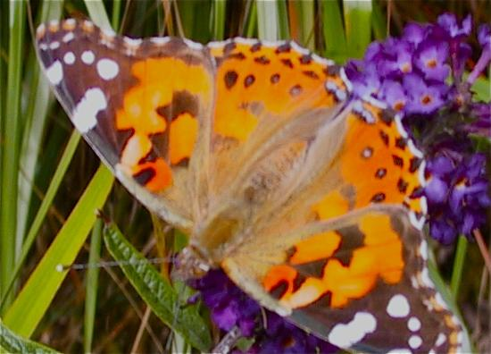 Ambrosia Gardens Bed & Breakfast: Butterfly Paradise