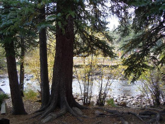 Glacier Lodge: Wildwood