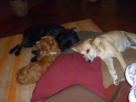 The Green House Peru: Laika, Paco y Yana descansando después de un largo día de trabajo.