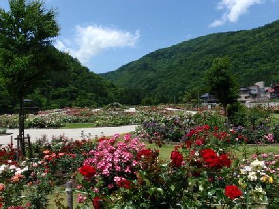 Kawai Rose Garden