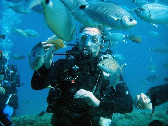 Oludeniz Diving Center : Beginner's dives