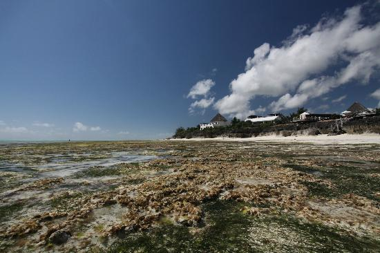 Essque Zalu Zanzibar: Very low tide