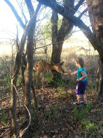 Monateng Safari Lodge: Gentle Kudu