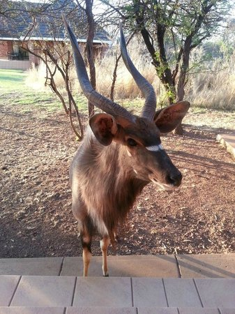 Photo of Monateng Safari Lodge Pretoria
