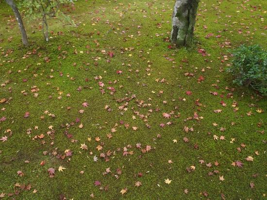 大河內山莊庭園照片