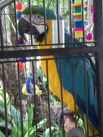 Hyatt Centric Key West Resort and Spa: Odie, the hotel's Blue & Gold Macaw