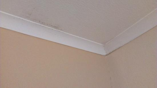 Westlodge Hotel: Mildew on ceiling that needed cleaning