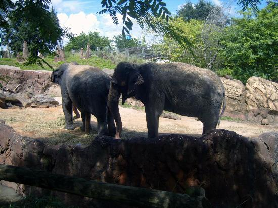 Busch Gardens: elephant's