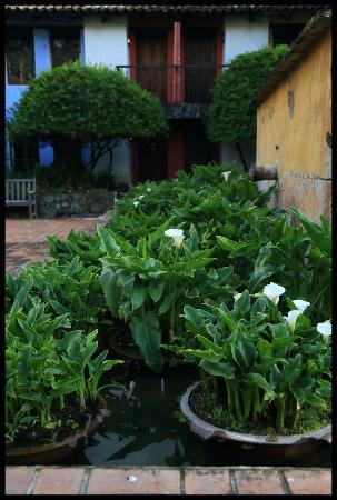 Quinta de las Flores : Garden detail