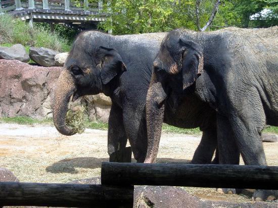 حدائق بوش: elephant's 