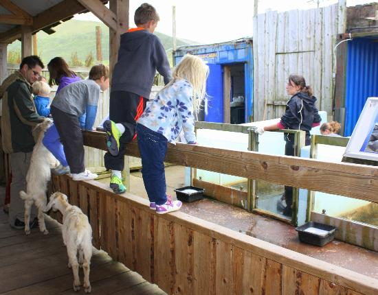 Dingle Wildlife & Seal Sanctuary : watching the volunteers feed the seals