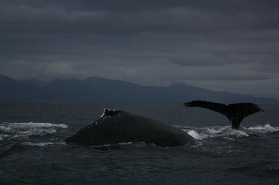 Hoonah Travel Adventures: Whale watching Hoonah