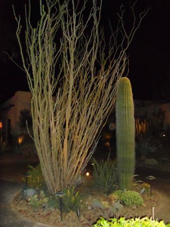 The Wigwam: piante nel giardino