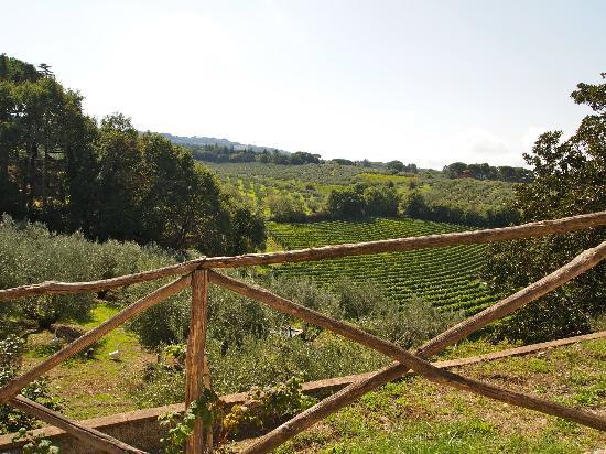Wine in Tour, Frascati, Italy