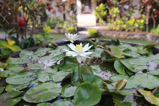 Sagittarius Inn: Lotus flower in garden