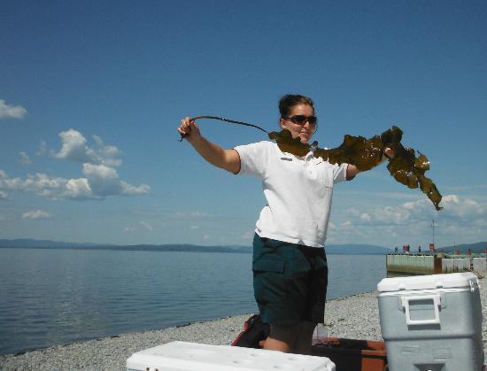 Camping Des-Rosiers : activités d'interprétation