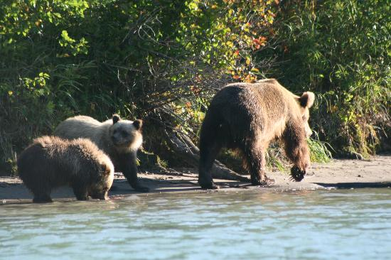 ‪‪Tower Rock Lodge‬: Sow and her cubs at Crescent Lake‬