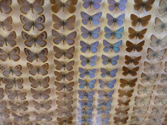 Esapolis - Museo Vivente degli insetti : esapolis. teche con farfalle