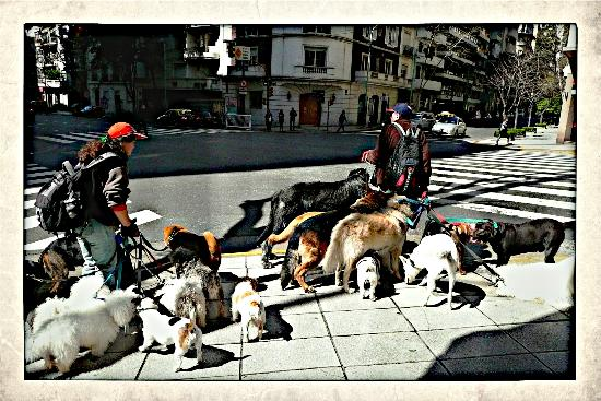 Ρεκολέτα: Dog-walkers in Recoleta