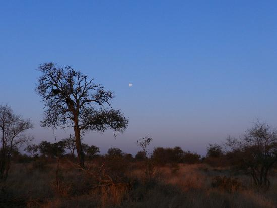 Tanda Tula Safari Camp: Daybreak