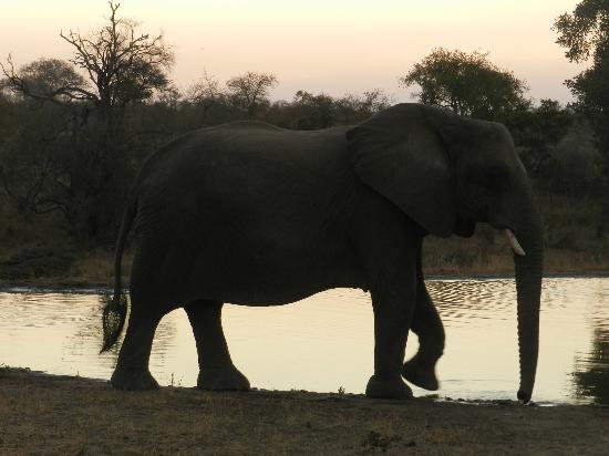 Tanda Tula Safari Camp: Elephant by a watering hole