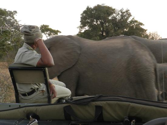 Tanda Tula Safari Camp: See how close we are to the elephant