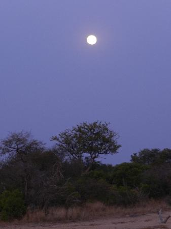 Tanda Tula Safari Camp: Full moon over the bush