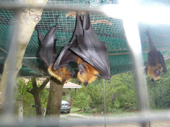 Omusee Guesthouse: The Fruitbats (They are not to end up in a curry :-) )