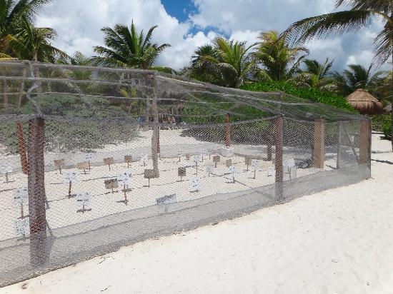 TRS Yucatan Hotel: Sea Turtle Egg Sanctuary