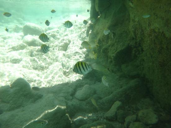 TRS Yucatan Hotel: Fish in the Natural Pool