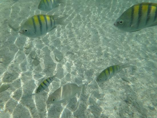 TRS Yucatan by Palladium: Fish in the Natural Pool