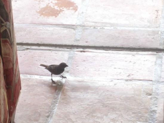Windjammer Landing Villa Beach Resort: Our little bird buddy, it was an open air room so we had visitors