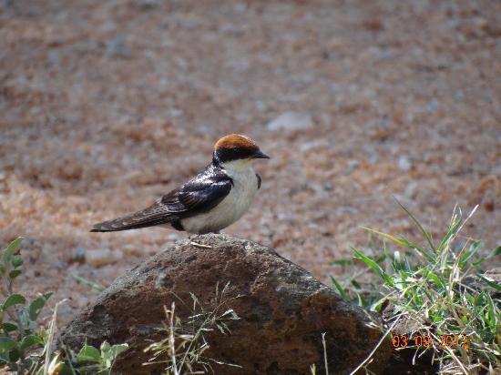 Porini Mara Camp: bird
